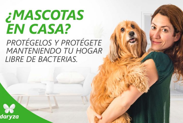¿Mascotas en casa? protégete y protégelos manteniendo tu hogar libre de bacterias
